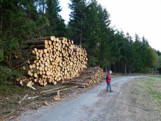 Bořitov - likvidace červencové větrné kalamity v lese podél silničky mezi Nekoří a Bořitovem