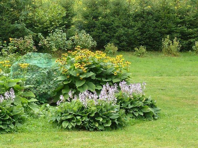 Ostružná - okrasná horská zahrada