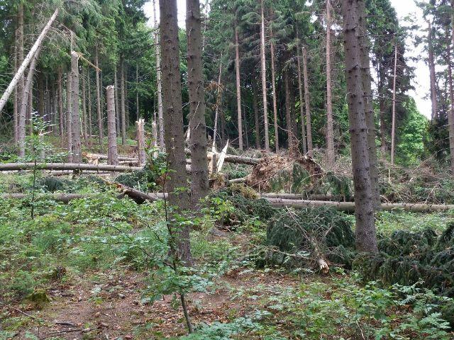 """Ostružná - následky vichřice 8.července 2015 v lesním porostu """"U Líp"""""""