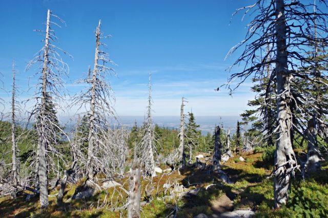 Prales ve Sněžných jamách.
