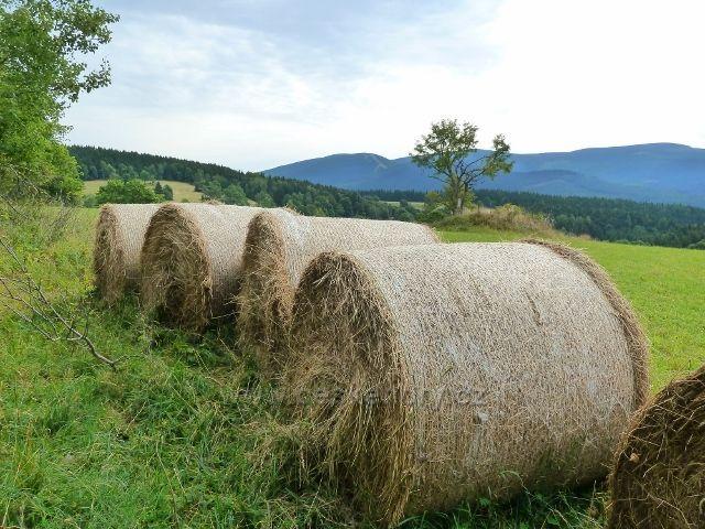 Ostružná - sklizeň otavy na Holém vrchu, v pozadí pásmo Šeráku