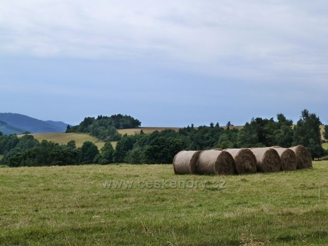 Ostružná - sklizeň otavy na pastvinách Holého vrchu
