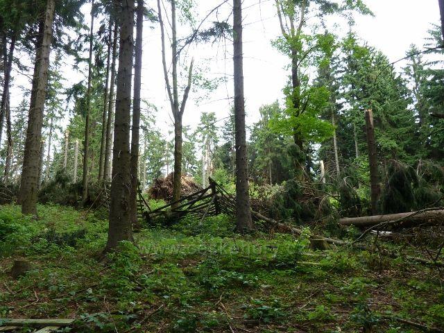 Kronfelzov - polom způsobený červencovou vichřicí nad osadou Kronfelzov