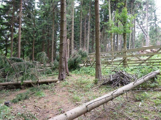 Ostružná - výsledek řádění červencové vichřice na Holém vrchu