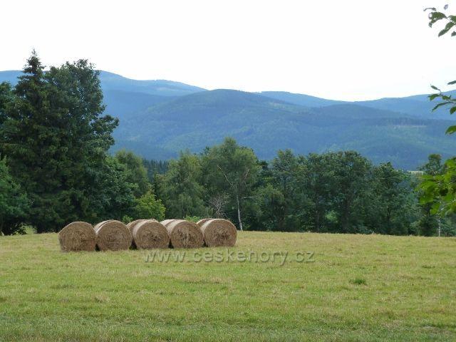 Ostružná - sklizeň otavy na pastvinách  Holého vrchu, v pozadí jesenické vrcholy nad Brannou