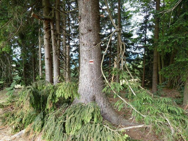 Kronfelzov - polom způsobený červencovou vichřicí v lesním porostu nad osadou