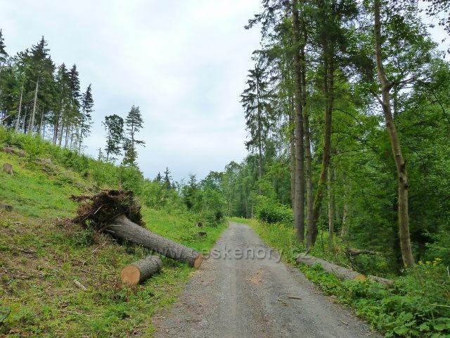 Kronfelzov - červencová vichřice se nevyhnula ani silničce do Branné