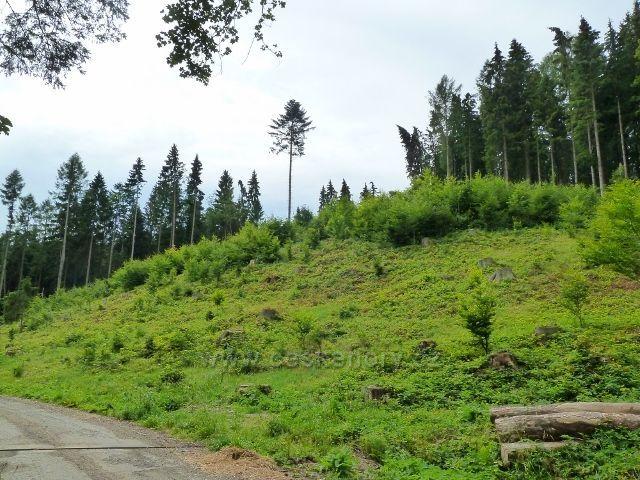 Kronfelzov - lesní porost nad silničkou do Branné