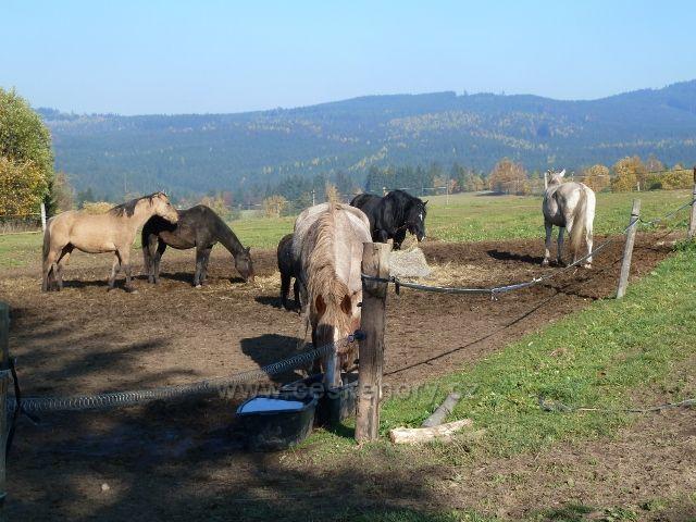 Písařov - koňský výběh na úpatí Hřebínku