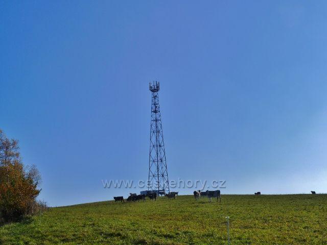 Písařov - pastva skotu na vrcholku Hřebínku