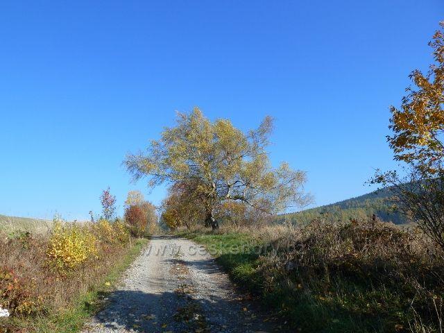 Písařov - cesta po úbočí Hřebínku do obce ke škole