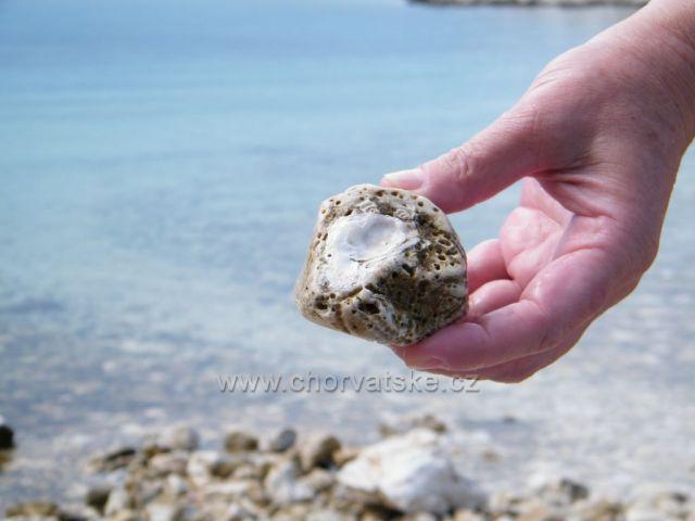 Mušle v kameni