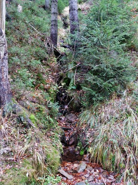 Dolní Morava - jedna z mnoha zdrojnic vody na úbočí Klepáče  nad cestou po žluté TZ