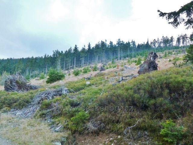 Dolní Morava - paseka po větrné kalamitě na úbočí Klepáče