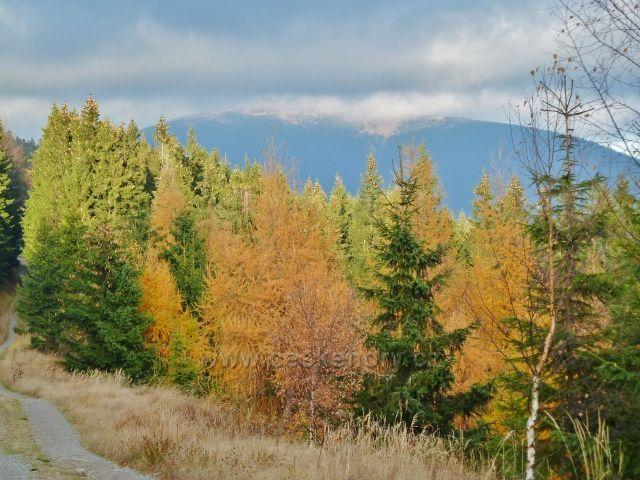 Dolní Morava - barvy podzimu na úbočí Klepáče, v pozadí Králický Sněžník