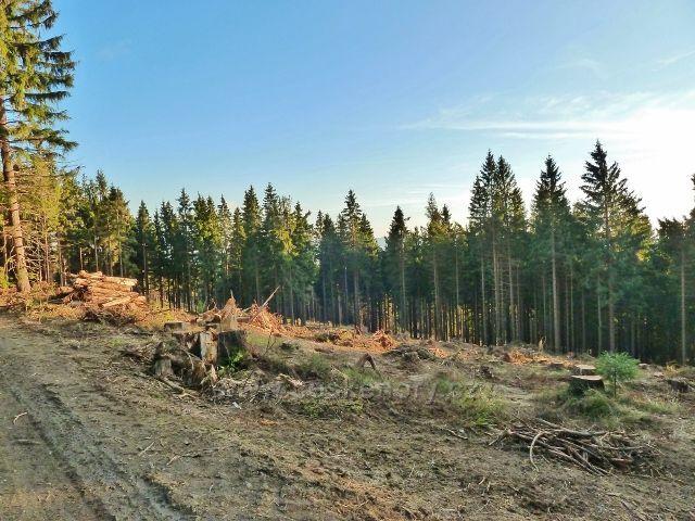 Dolní Morava -vytěžená plocha po červencové větrné kalamitě na úpatí Klepáče
