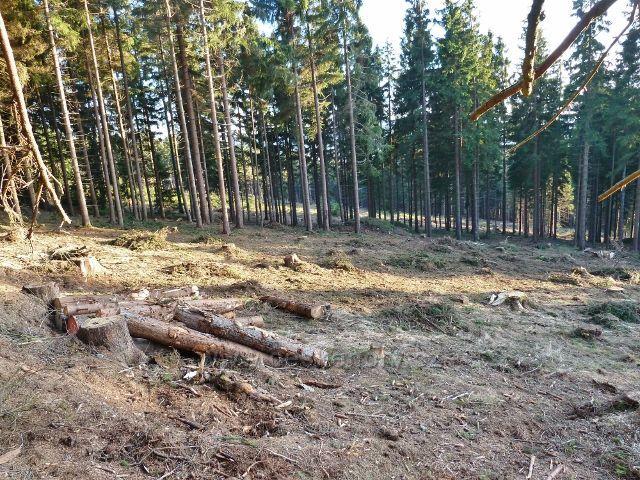 Dolní Morava - paseka po zpracovaných polomech způsobených červencovou vichřicí