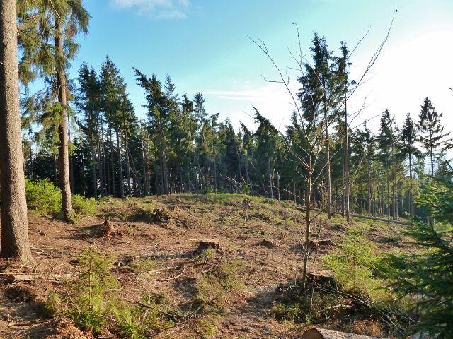 Dolní Morava - paseka po zpracovaných polomech na úpatí Klepáče způsobených červencovou vichřicí