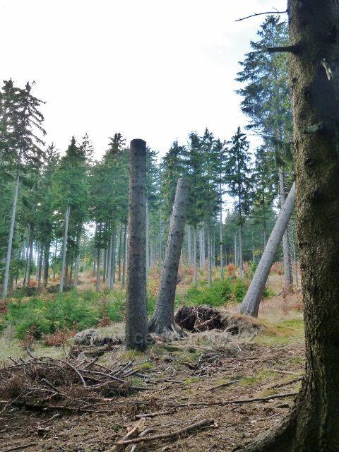 Dolní Morava - důsledek červencové větrné kalamity na úpatí Klepáče
