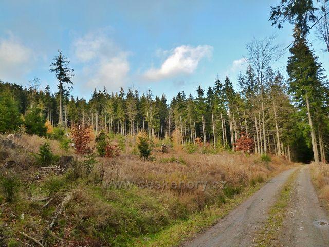 Dolní Morava - lesní porost u cyklostezky 6229 v lokalitě Nad Sršňovkou na úpatí Klepáče