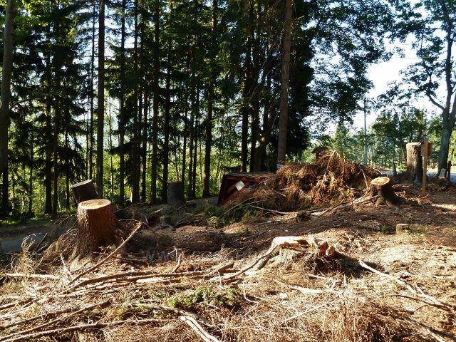 Dolní Morava - rozcestí Pod Klepáčem po červencové vichřici