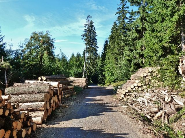 Dolní Morava - skládky kalamitního dřeva u rozcestí Nad Sršňovkou