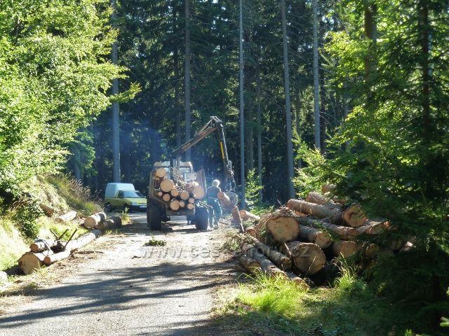 Dolní Morava - odvoz kalamitního dřeva z vrstevnicové cesty ke Zbojnické chatě