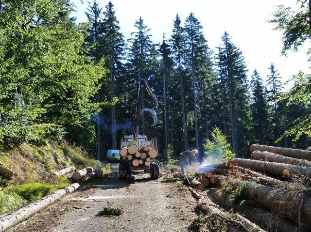 Dolní Morava - manipulace a odvoz kalamitního dřeva na vrstevnicové cestě po žluté TZ ke Zbojnické chatě