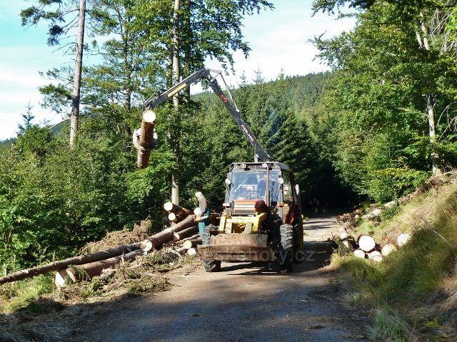 Dolní Morava - přibližování kalamitního dřeva k vrstevnicové cestě  vedoucí ke Zbojnické chatě