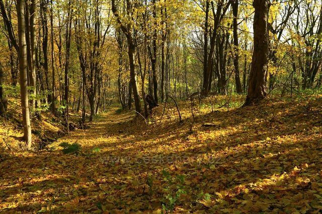 Zaniklou podzimní cestou