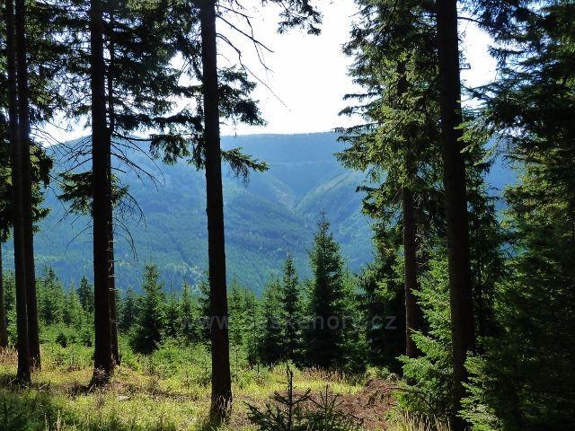 Dolní Morava - průhled do protilehlého údolí potoka Poniklá z rozcestí nad Zbojnickou chatou