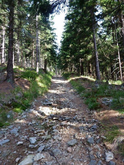 Dolní Morava - spojovací cesta po žluté TZ mezi dolní a horní vrstevnicovou cestou po úbočí Klepáče má táhlé stoupání