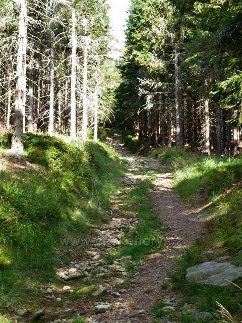 Dolní Morava - spojovací cesta mezi dolní a horní vrstevnicovou cestou po úbočí Klepáče táhle stoupá