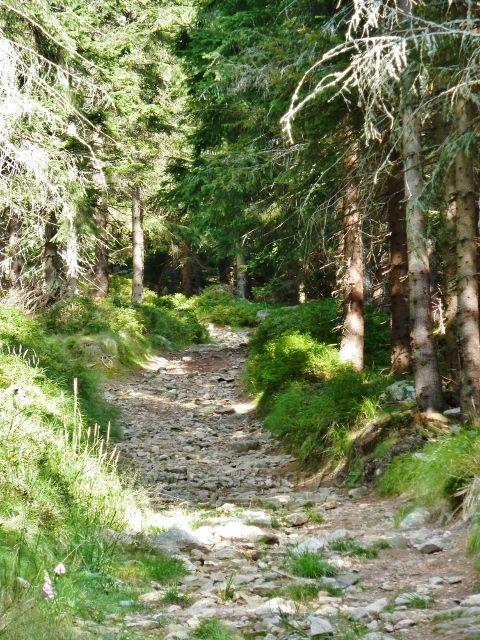 Dolní Morava - spojovací cesta po žluté TZ mezi dolní a horní vrstevnicovou cestou po úbočí Klepáče  je místy značně kamenitá