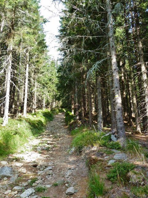 Dolní Morava - spojovací cesta po žluté TZ mezi dolní a horní vrstevnicovou cestou po úbočí Klepáče
