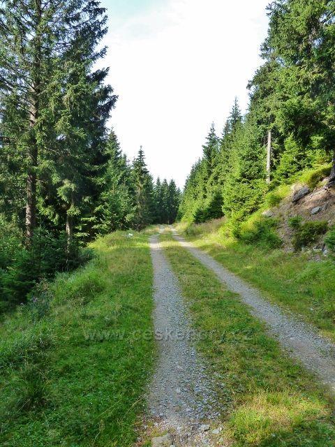 Dolní Morava - vrstevnicová cesta po červené TZ k sedlu Puchača