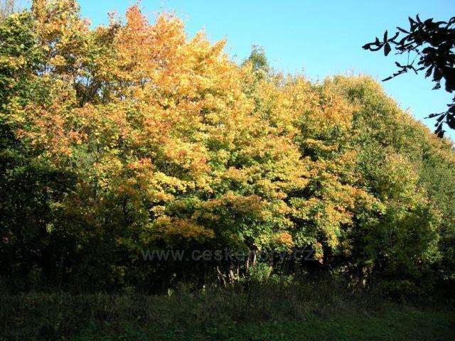 podzimní barvy stromů