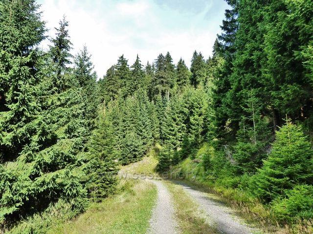 Dolní Morava - vrstevnicová cesta po červené TZ od rozcestí Nad Zbojnickou chatou do sedla Puchača