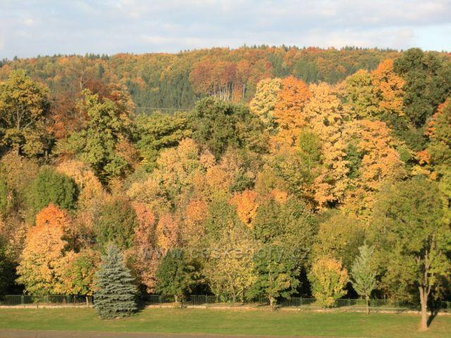 podzimní barvy stromů I