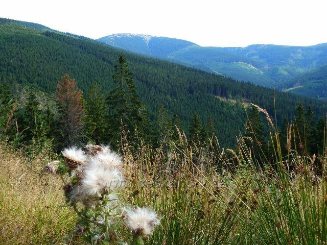 Dolní Morava - pohled z úbočí Klepáče ke Králickému Sněžníku