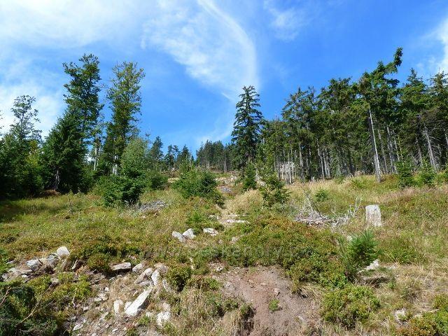 Dolní Morava - lesní porost v suťovém pásmu na úbočí Klepáče
