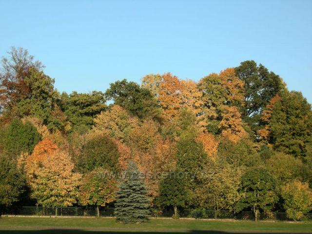 podzimní barvy stromů III
