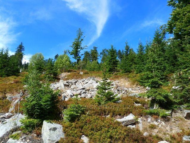 Dolní Morava - suťové pole na úbočí Klepáče