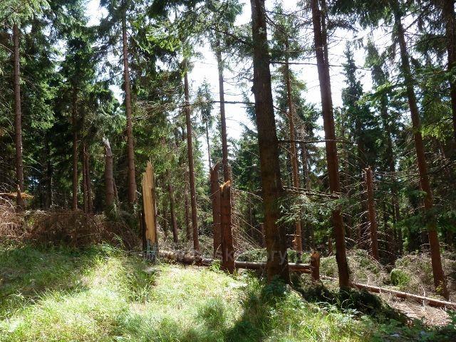 Dolní Morava - následky červencové vichřice nad pramenem Lipkovského potoka