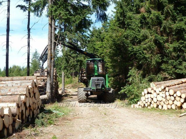 Dolní Morava - odvoz kalamitního dřeva zev skládky na rozcestí Nad pramenem Lipkovského potoka