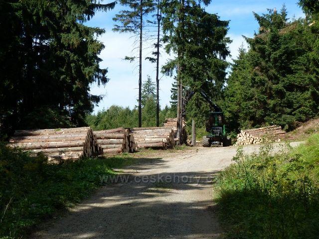 Dolní Morava - skládka kalamitního dřeva na rozcestí Nad pramenem Lipkovského potoka