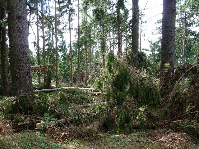Dolní Morava - následky červencové vichřice na úpatí Klepáče
