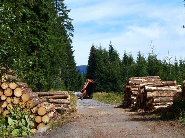 Dolní Morava - přibližování dřeva lanovkou u rozcestí Nad Sršňovkou