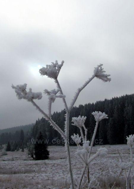 Ledový květ