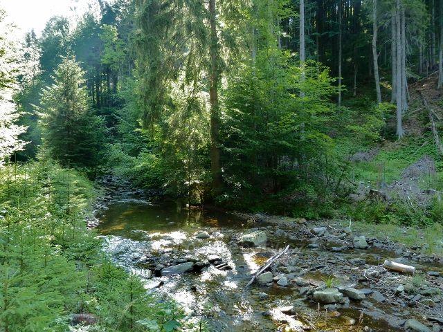 Branná - Klepáčský potok